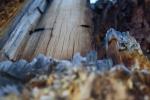 A fallen piece wood