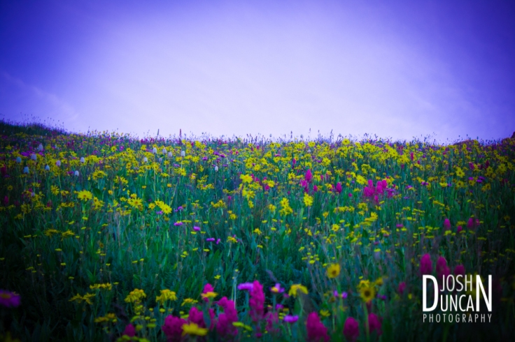 I love this shot of the wildflowers
